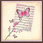 Butterfly-script-lg