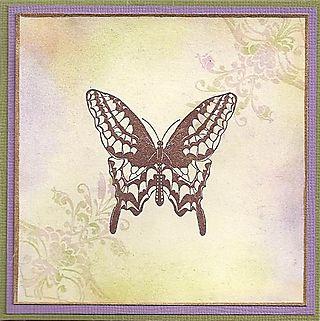 Butterfly-1-lg