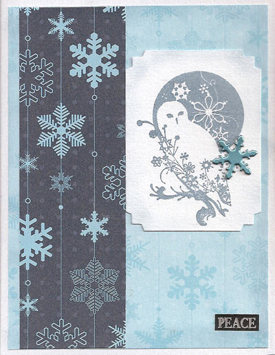 Winter-Birds-Barn-Owl