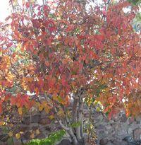 Fall-Tree-lg