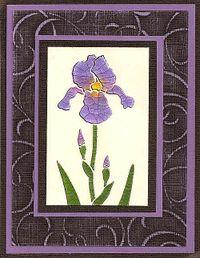 Crackle-Iris-Kathi