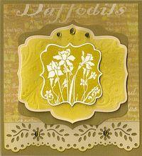 Hero-Daffodils
