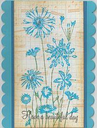 Blue-scallop-flowers