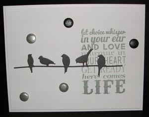 Birds-Wire-Life