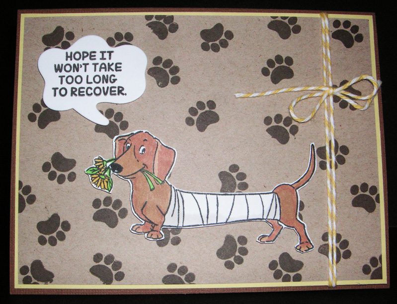 Recover-Dog-Paws